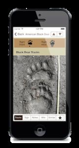 iTrack Wildlife App Screenshot Black Bear Track