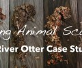 Aging Animal Scats – A Study with River Otter Scats