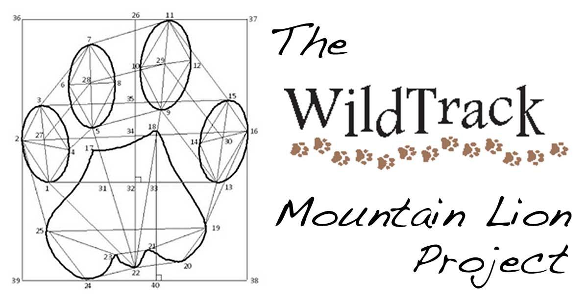 WildTrack-Measurements1