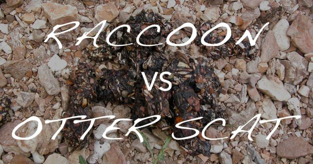 Distinguishing Raccoon from Otter Scat