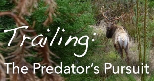 Trailing: The Predator's Pursuit