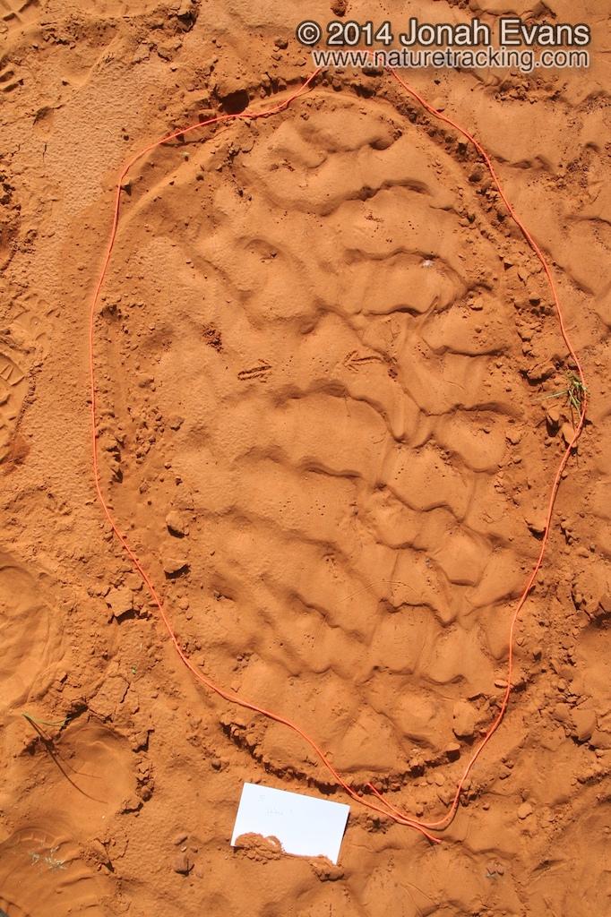 Frog Tracks
