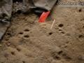 Cottontail Tracks