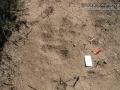 Dust Bath (Quail, Kangaroo Rat, & Cottontail)