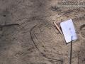 Ant Lion Trail