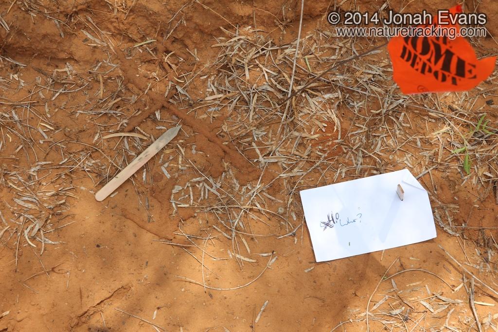 Termite Sign