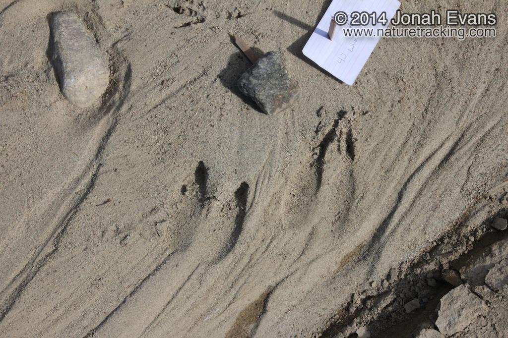 Llama Tracks