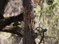 Bear Bite Tree