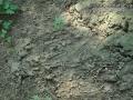 Beaver Scent Mound
