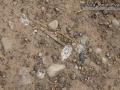 Cottontail Urine