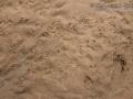 Armadillo Tracks