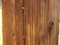 Acorn Woodpecker Cache