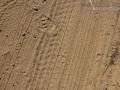 Woodrat Tracks (1)