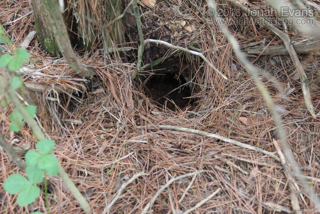 Armadillo Hole