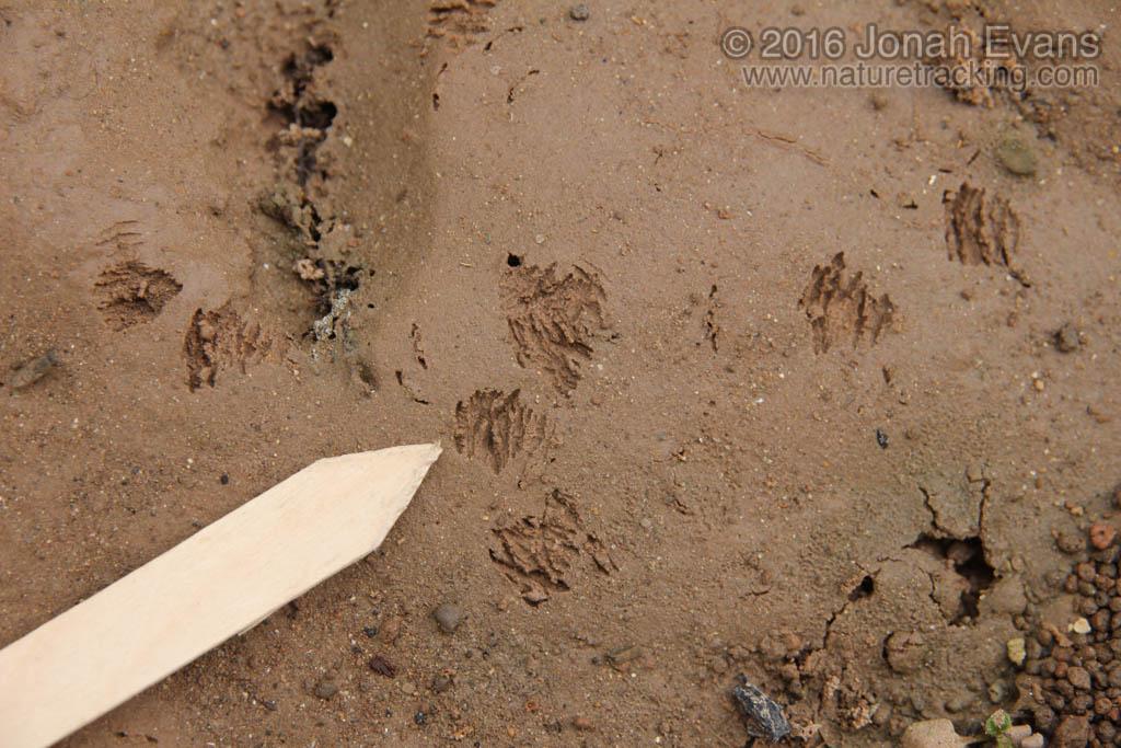Mud Dauber Digs