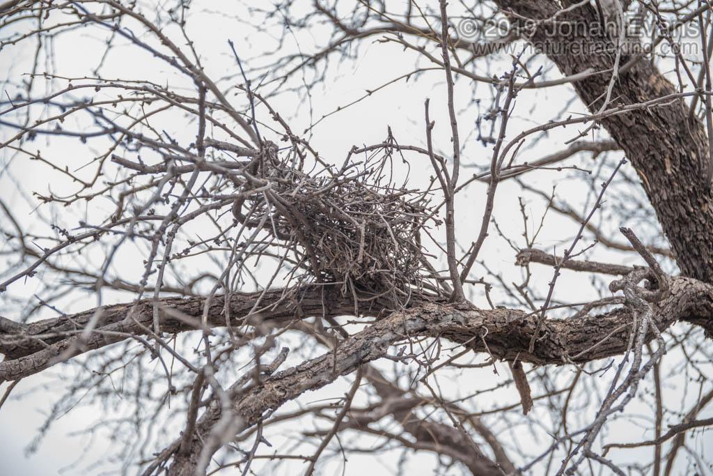 Dove Nest