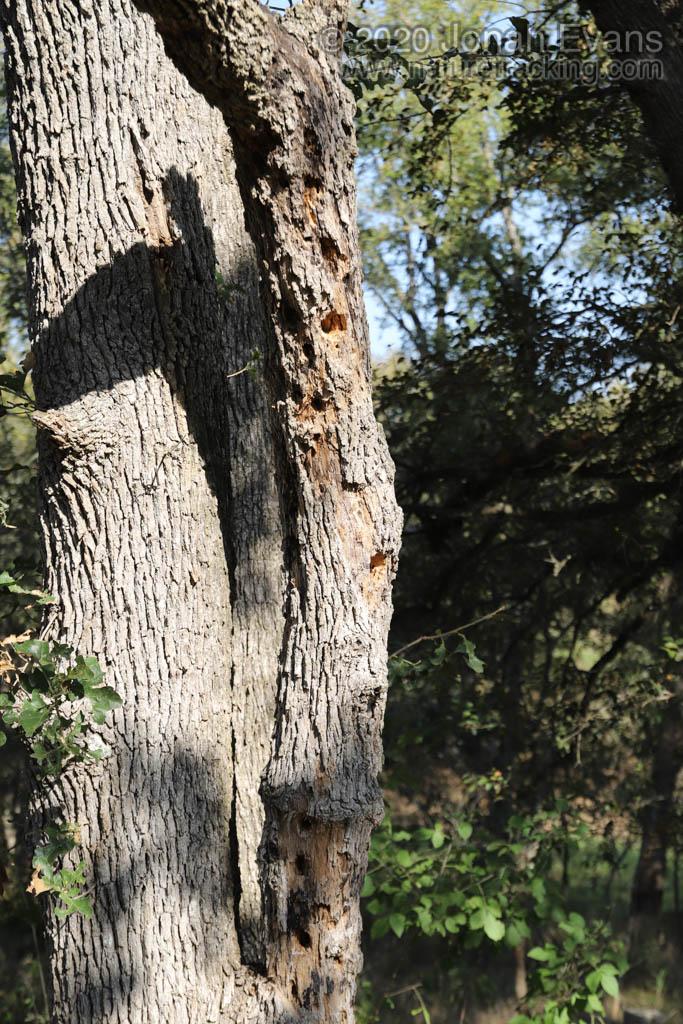 Woodpecker Sign