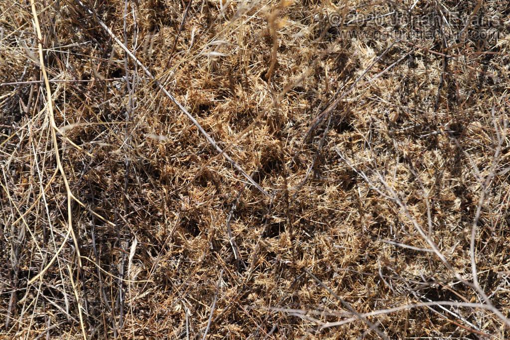 Ant Chaff