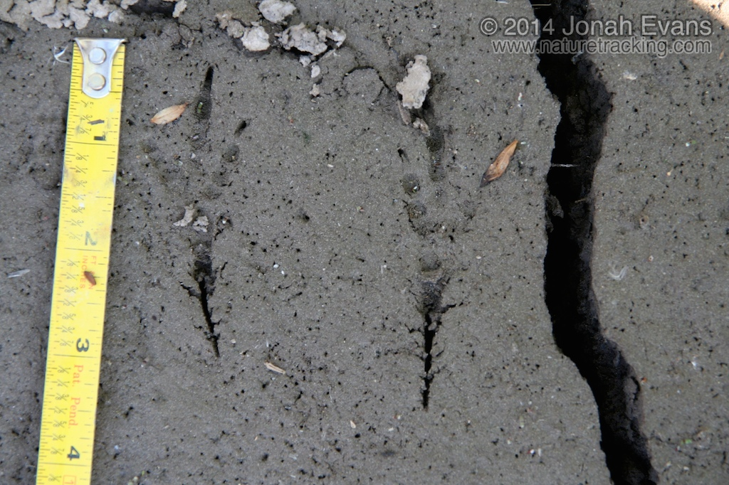 Magpie Tracks
