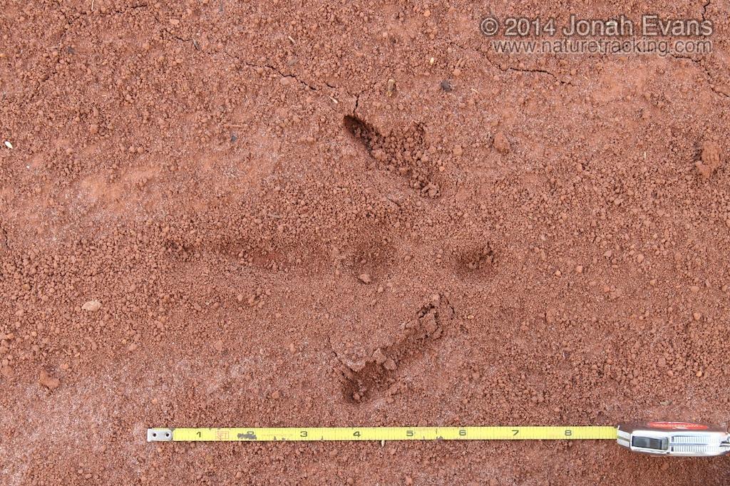 Rea Tracks (South America)