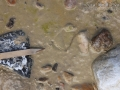 Duck Tracks