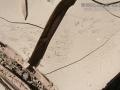 Lizard Claw Marks