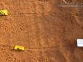 Snake Tracks