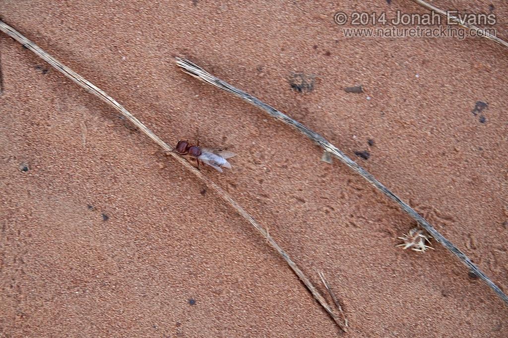 Ant Tracks
