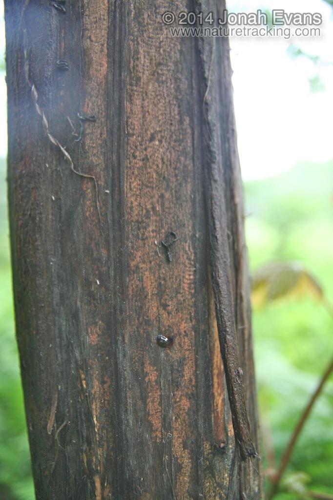 Slug Scat