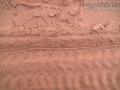 Centipede Tracks