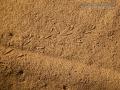 Spider Tracks