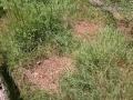 River Otter Scat
