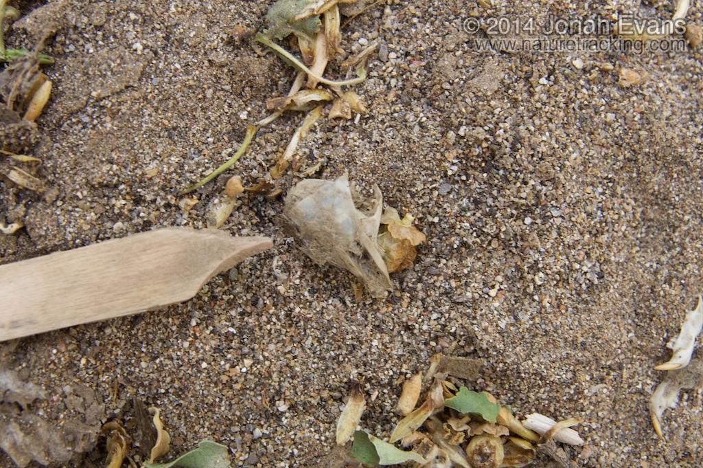 Pocket Mouse Sign