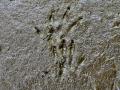 Groundhog Tracks