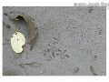 Jumping Mouse Tracks