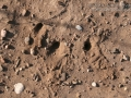 Kangaroo Rat Digs