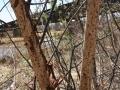 Porcupine Chews