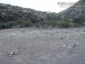 Burro Tracks