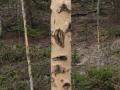 Elk Feeding Sign