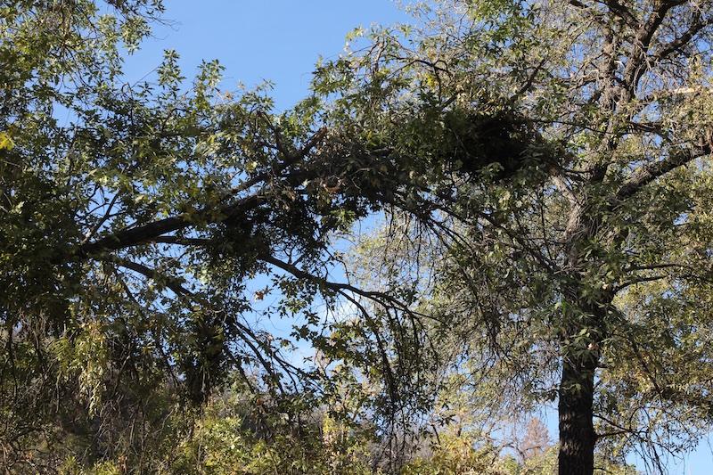 Black Bear Nest