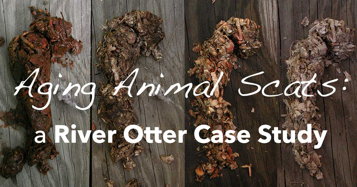 Aging-Otter-Scat