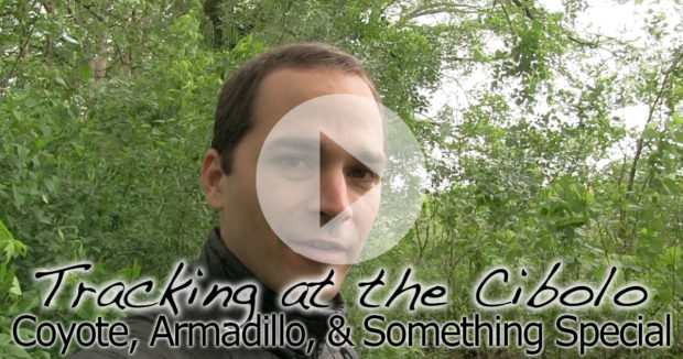 Tracking at the Cibolo Nature Center in Under 5 Minutes