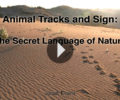 Intro to Animal Tracking Webinar